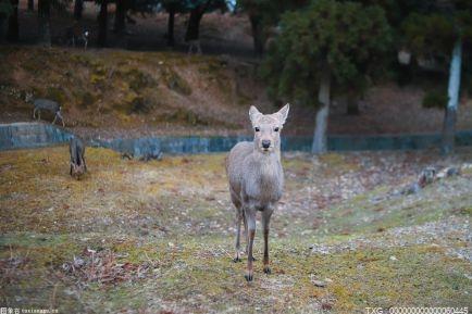 围栏阻隔动物迁徙和基因交流 影响全球生物多样性目标实现