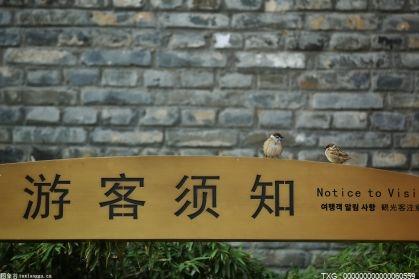 """218种空中""""好邻居""""出没市属公园 占北京野生鸟类四成"""