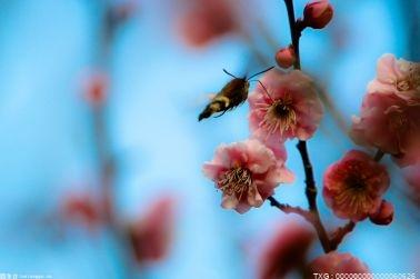 """展览持续到""""十一""""黄金周 300余种新优花卉亮相世界花卉大观园"""