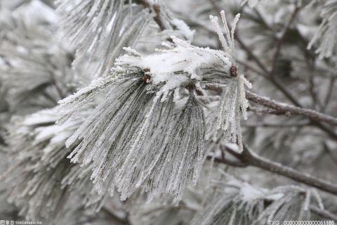 下半年来最强冷空气今起来袭  局地可达寒潮标准