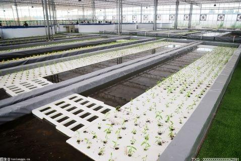 韶山乡全面启动优质油菜种植工作