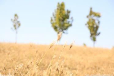 开展抢收支农无偿服务 惠及陵江镇1.2万多户5.7万余人