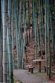全四川竹浆造纸企业都在开足马力满负荷生产